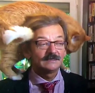 Кот прервал серьезное политическое интервью — смешное видео