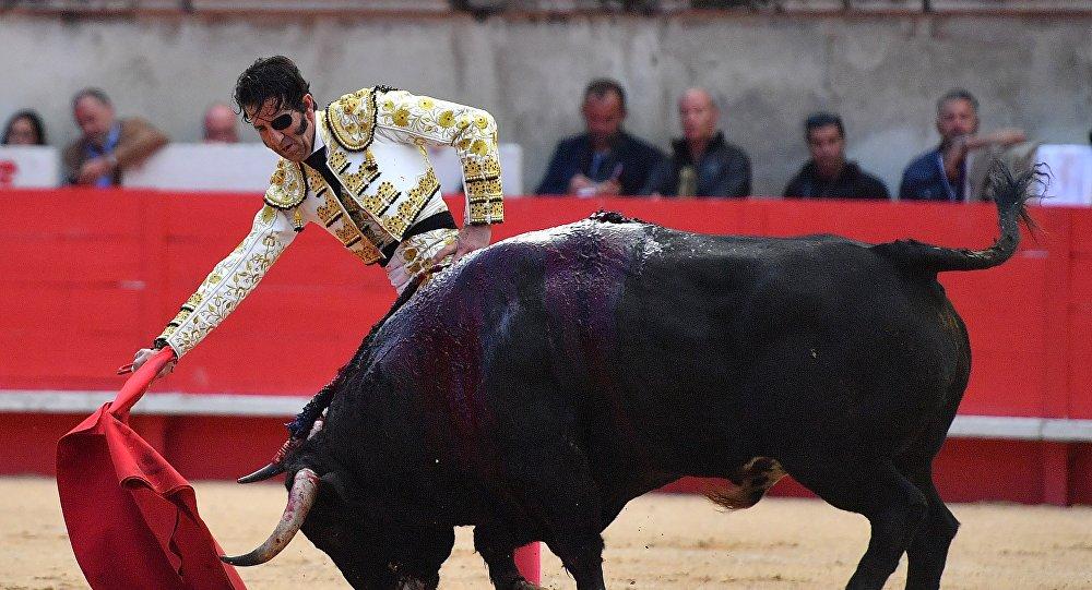 ВИспании бык снял скальп сизвестного матадора