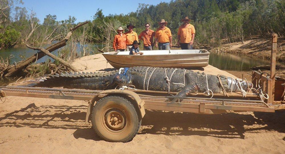 В Австралии поймали гигантского крокодила