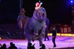 Слониха упала на зрителей во время выступления в цирке. Видео