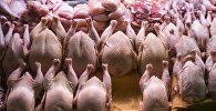 Прилавок с мясом птицы. Архивное фото