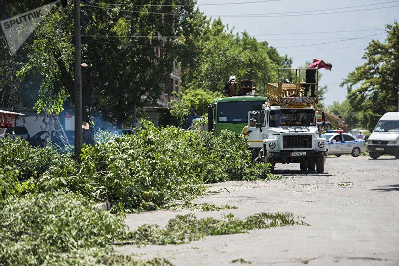 Сотрудники муниципальных служб во время вырубки деревьев на улице Токтоналиева в Бишкеке