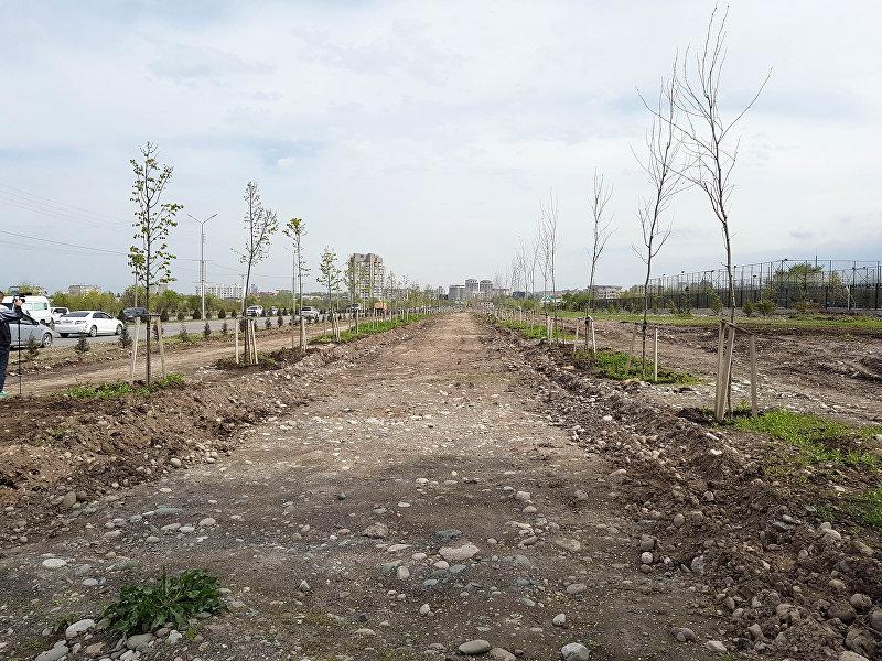 Импортные саженцы в Южной магистрали, которые были куплены МП Зеленстрой на 13 миллионов 763 тысячи сомов