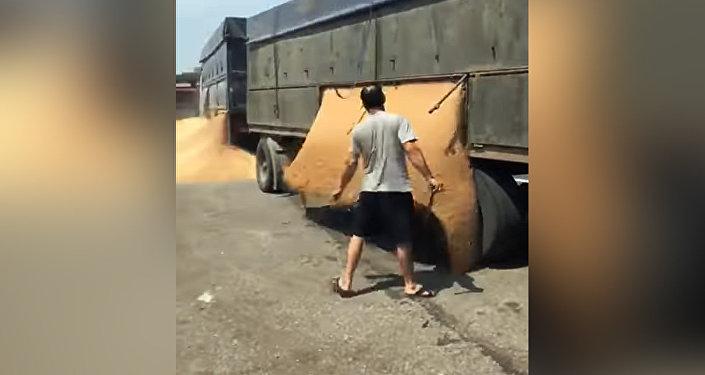 Буудай ташып бараткан айдоочунун полицияга ачуусу келген видеосу