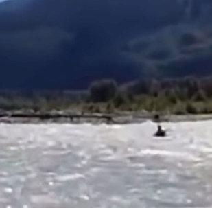 Мужчина в лодке чудом спасся от медведя гризли — пугающее видео