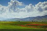 Маковые поля вблизи села Кара-Булак Лейлекского района. Архивное фото