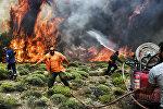 Пожарные тушат огонь во время лесного пожара в деревне Кинета, недалеко от Афин, 24 июля 2018 года