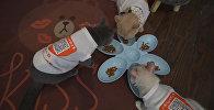 В китайском кафе коты помогают оплатить счет. Видео