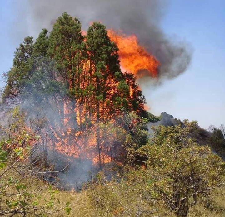 Пожар на приграничной с Казахстаном горе Алмалуу в Таласской области
