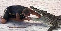 Крокодил едва не откусил руку дрессировщику на глазах у зрителей — видео