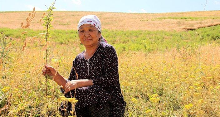 На помощь пришли больше 100 местных жителей, саженцы высадили на 21 гектаре земли.