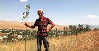 Ош облусунун Ноокат районунда жер көчкү жүрүү коркунучу бар аймактарга 9 миңден ашык алма, өрүк жана бадамдын көчөттөрү тигилди