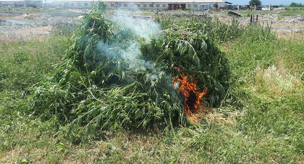 Конопля кыргызстан как себя ведут при употреблении марихуаны