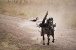 Каскадер Диана Ашырбаева исполняет трюк на лошади