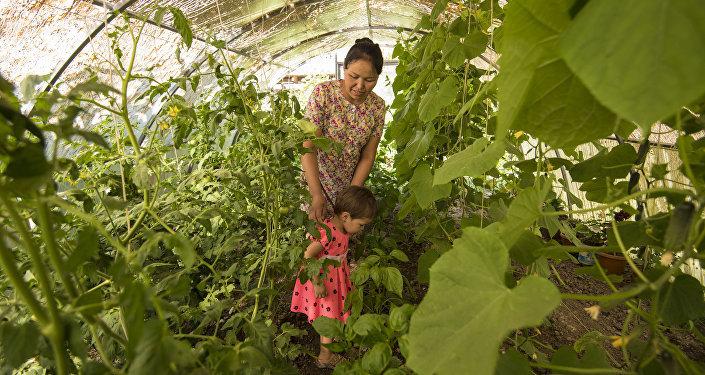 Малоимущие семьи Сузакского района Джалал-Абадской области обеспечили теплицами и обучили эффективным методам выращивания овощей в рамках проекта, профинансированного Россией