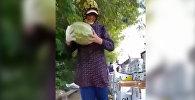 В Узбекистане уродился небьющийся арбуз — видео