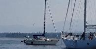 Авария в океане — косатка угнала яхту и столкнула ее с другим судном. Видео