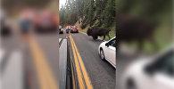 Мужчина устроил корриду с гигантским бизоном — впечатляющее видео