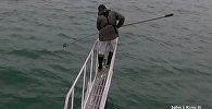 Большая акула попыталась столкнуть ученого с корабля — видео