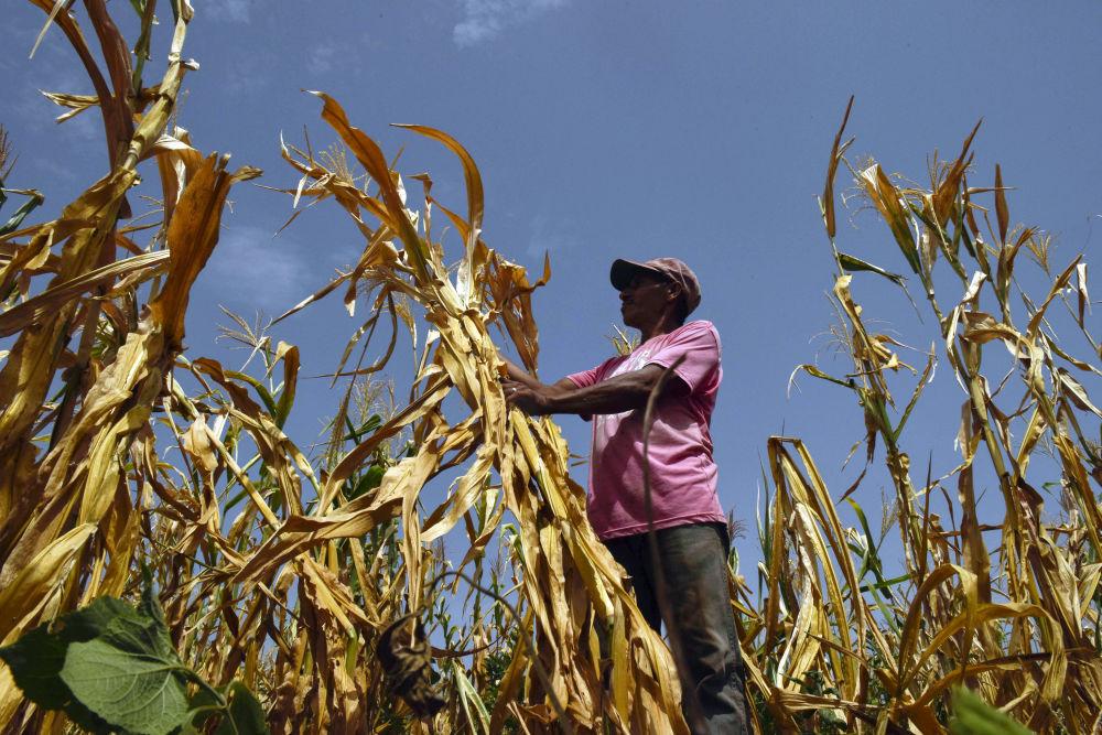 Фермер, потерявший урожай из-за засухи, на поле в Усулутане (Сальвадор)