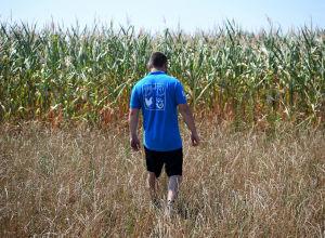 Фермер на кукурузном поле пострадавшем от засухи. Архивное фото
