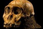 3 миллион жыл мурда пайда болгон homo erectus. Архивдик сүрөт