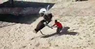 Агрессивный страус в брачный период атаковал работника зоопарка — видео