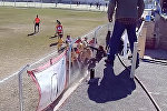 Футболистки устроили массовую драку. Видео из Аргентины