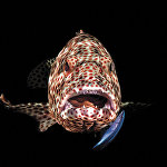 Победители конкурса фотографий подводного мира журнала Scuba Diving Magazine