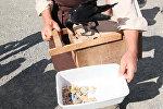 Вороны собирают окурки и мусор во французском парке — видео