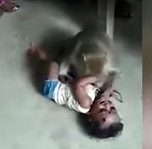 Обезьяна пыталась украсть младенца на глазах у десятков людей — видео