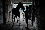 Лошадь в конюшне. Архивное фото