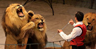Дрессировщик и львы. Архивное фото