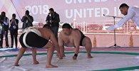 Как сумоисты боролись на Иссык-Куле — самые интересные моменты. Видео