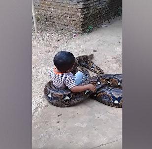 Малыш беззаботно играет с огромным питоном — соцсети в шоке. Видео