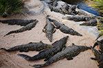 Крокодил фермасы. Архивдик сүрөт