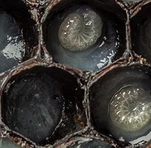 Как на свет появляются пчелы — интересное видео