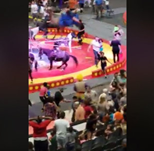 Испуганный верблюд напал на зрителей во время представления в США — видео