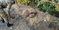 В селе Ак-Жол Сокулукского района Чуйской области местные жители нашли проржавевшие боевые снаряды
