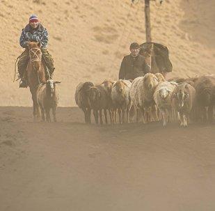 Чабаны во время перегона овец. Архивное фото