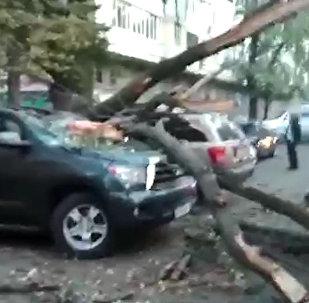 Бишкектин чок ортосунда жол тандабастын үстүнө бак кулады. Видео