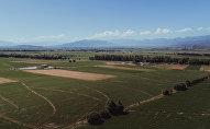 Пшеничные поля вблизи села Кочкор Нарынской области. Архивное фото