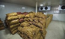 Урожай картофеля в логистическом центре. Архивное фото