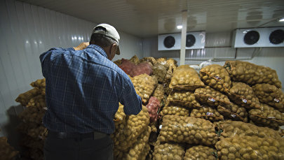 Кеминдин логистикалык борборунда сакталып турган картошка. Архивдик сүрөт