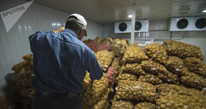 Картошка сакталуучу жай. Архивдик сүрөт