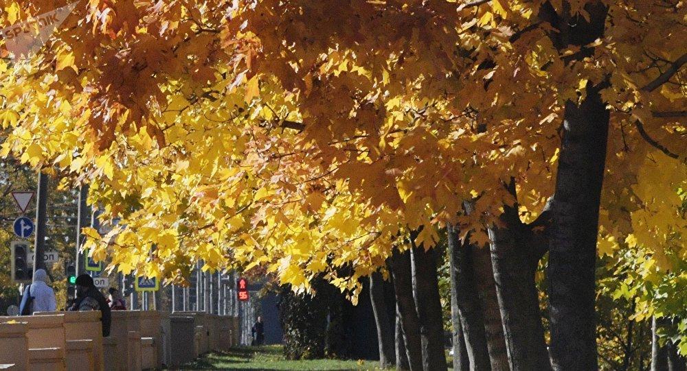 Осенние деревья в парке. Архивное фото