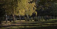 Деревья в парке. Архивное фото