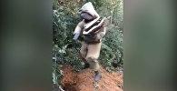 Мужчина умер мучительной смертью, сняв на видео свой танец с шершнями