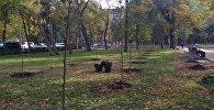Сотрудники муниципальных служб посадили деревья на проспекте Эркиндик, преимущественно возле детских площадок, где в теплое время года устанавливают батуты