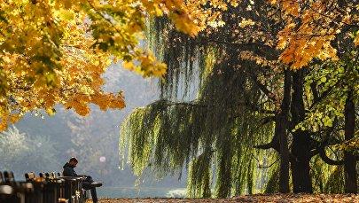Пожелтевшие деревья. Архивное фото